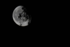 Moonlightcup19