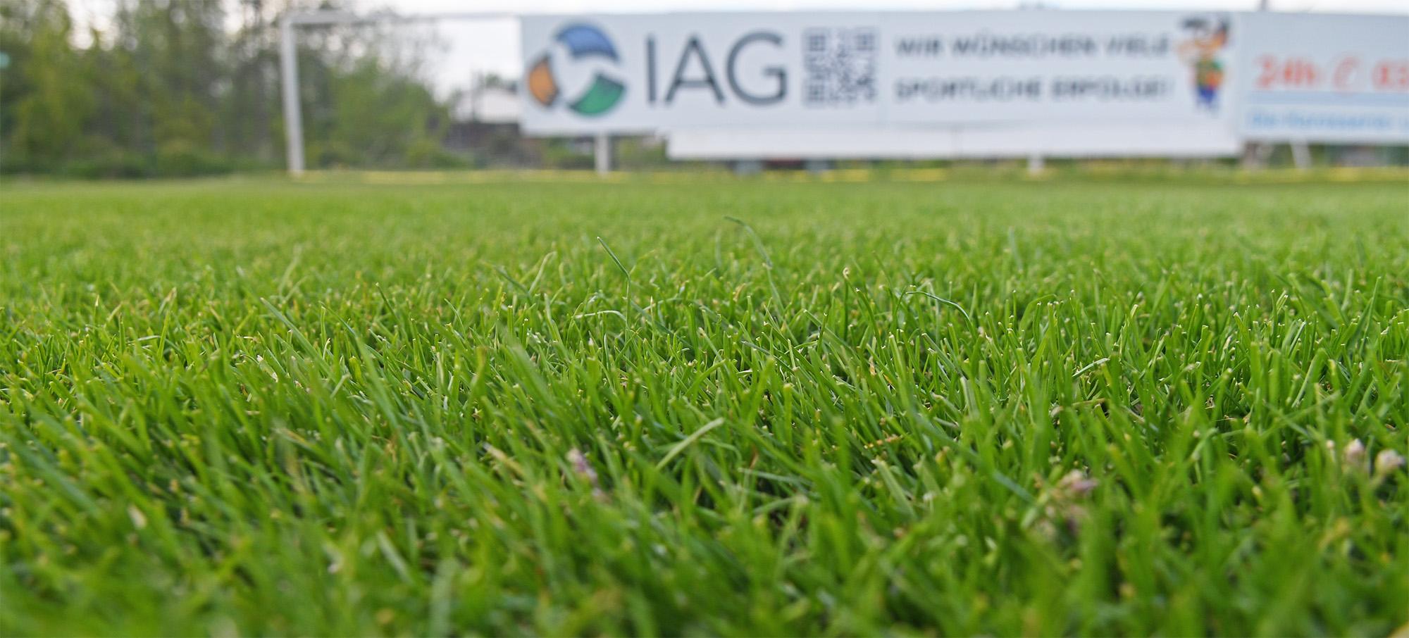 Wie ein Teppich - der Rasen im Palmberg-Stadion.